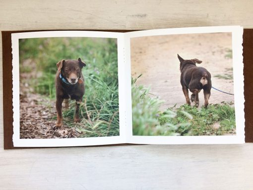 Dog-Photo-Album