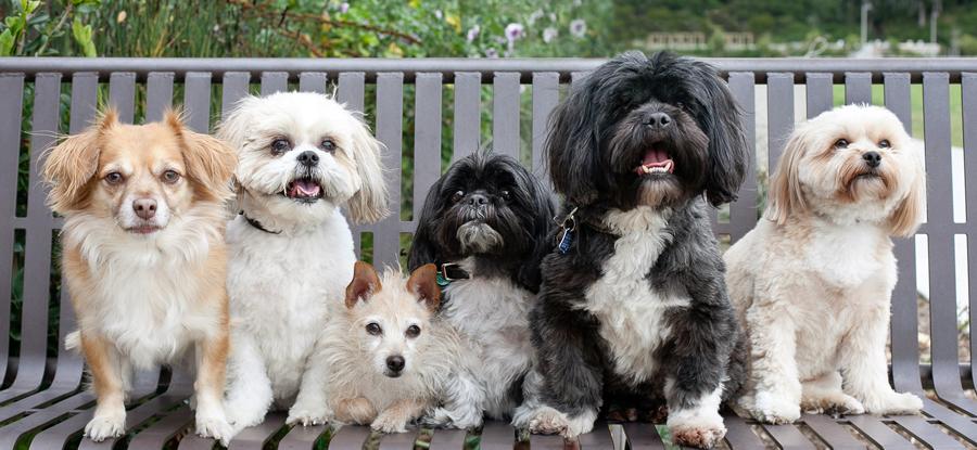 Dogs-On-Bench-Photo-Park-Mission-Viejo
