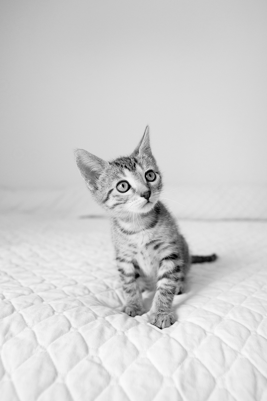 Kitten-Photo-Look-Wide-Angle
