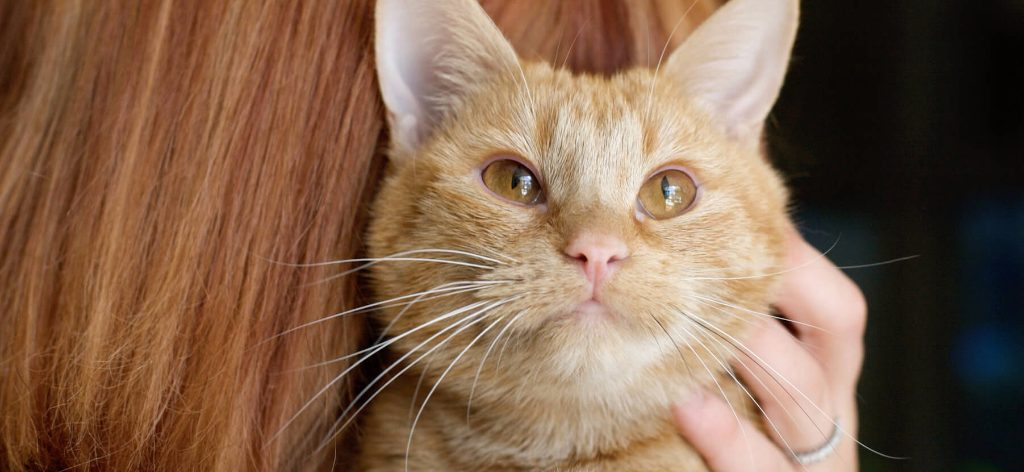 orange-tabby-cat-sitting-over-womans-shoulder