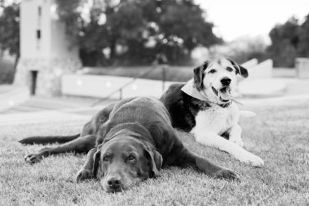 Pet-Photographer-Claremont-Old-Dogs