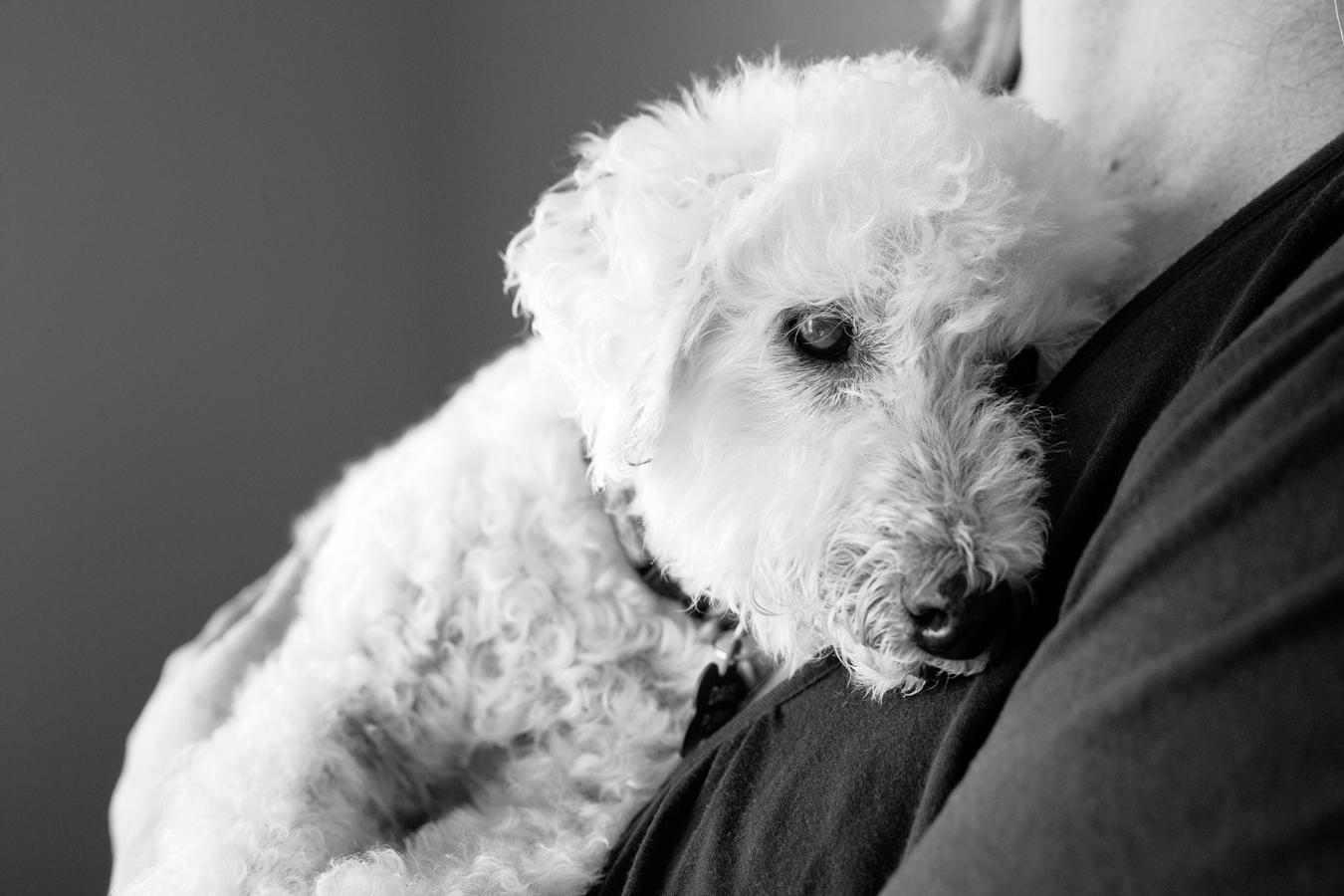 Senior-Poodle-Dog-Hug