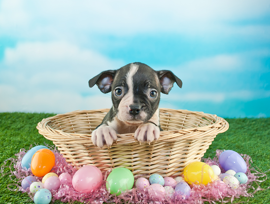 Fun Easter Egg Hunt for Dogs