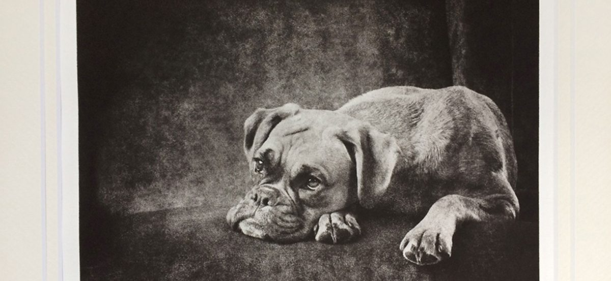 dog-portrait-etching-boxer