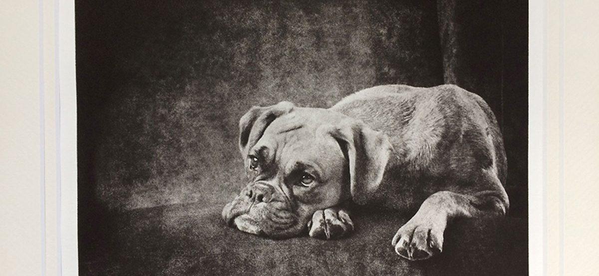 dog-portrait-etching-boxer
