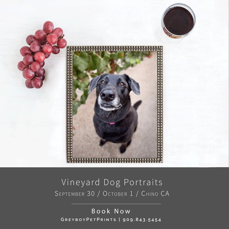 Vineyard Dog Photos in Chino CA
