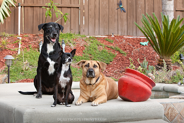 Dog-Photography-Eastvale