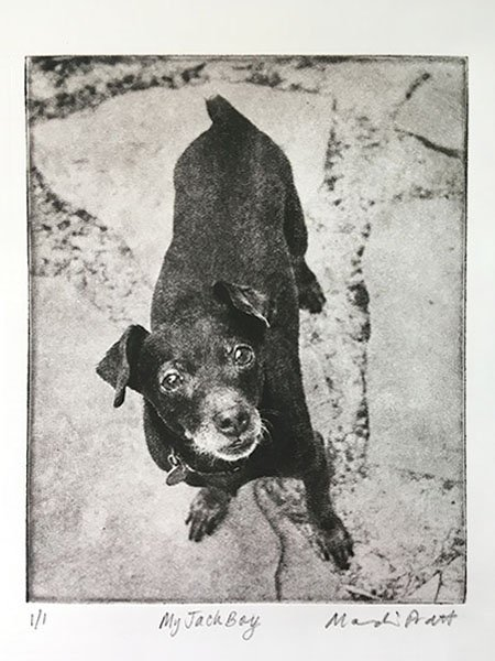 dog-etching-chihuahua-mix-standing-on-stepping-stones-looking-up