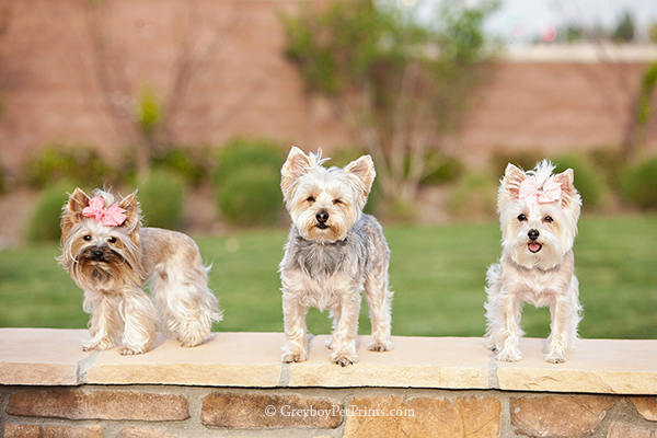 Dogs-photographed-at-park-on-wall