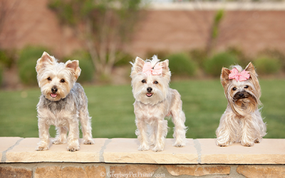 Photoshoot for 3 dogs in SoCal