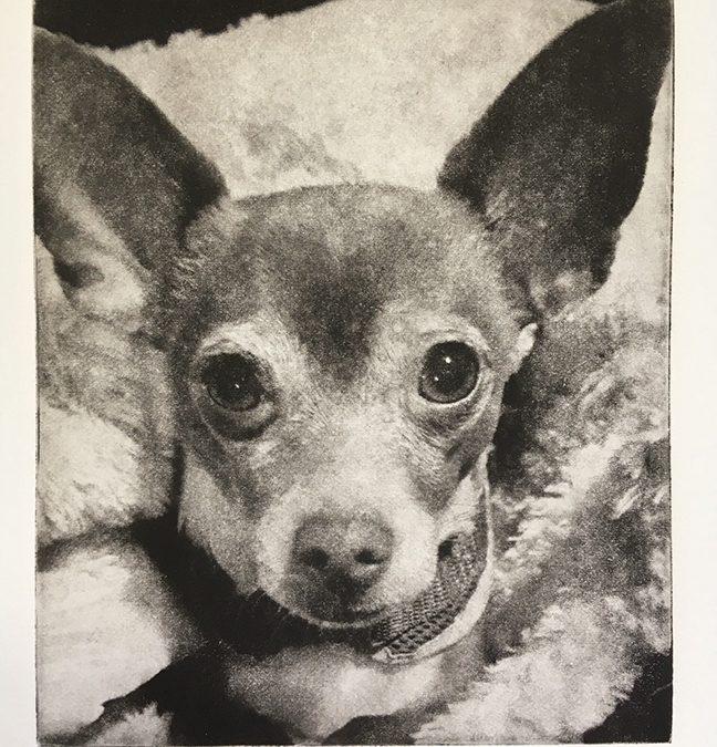 Celebrate-Dogs-Art-Chihuahua-Etching