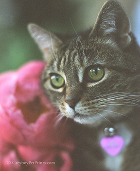 cat-photo-with-peony-flowers