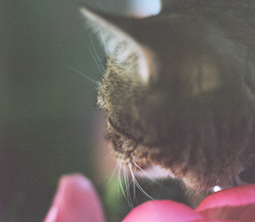 Cat photo with peony flowers