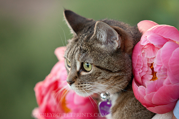cat-photograph-with-flowers