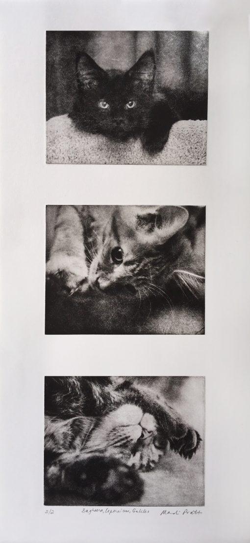 Custom-Pet-Art-Collage