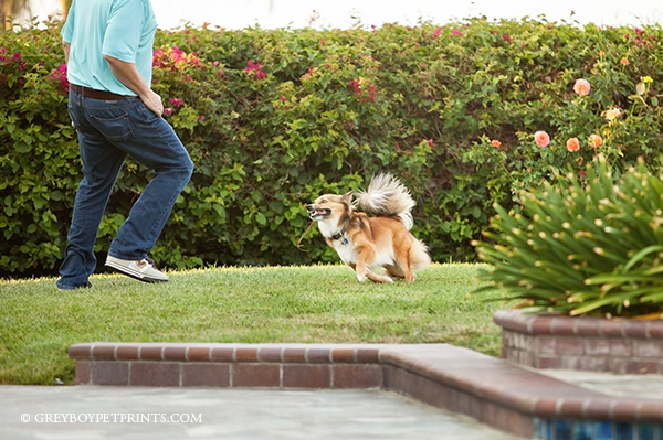 Dog Photography Session in Laguna Niguel WITH DAD