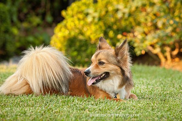 Handsome-Dog-Portrait-OC