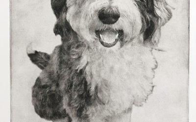 Custom Dog Portrait Etching   Ted