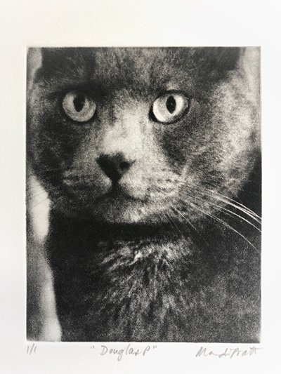 etched portrait holiday gift of a gray cat