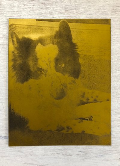 art commissioned custom dog portrait etching plate to make holiday gift