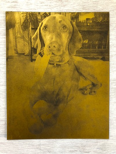 Inked and Etched Plate of Dog Portrait