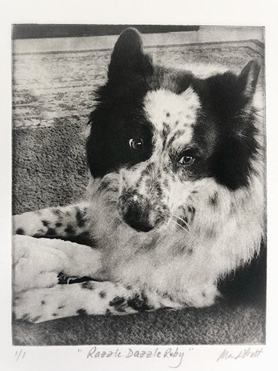 Blue Heeler and Pyrenes dog mixed breed dog portrait etching of dog with toy