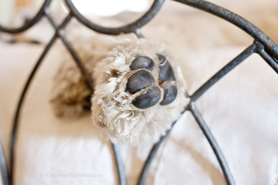 pictures-dog-details-paw