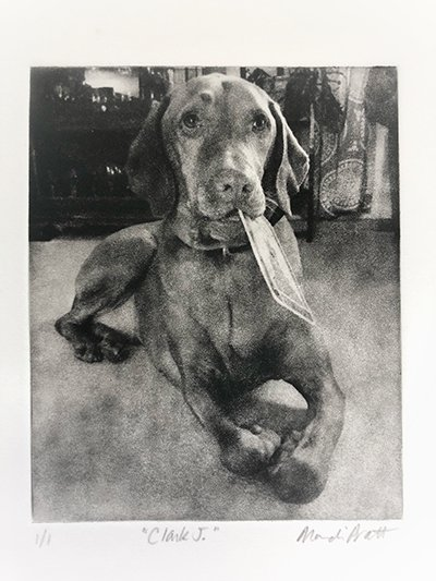 Dog Portrait of Vizsla sitting on the carpet holding a card in his mouth - Commissioned for Christmas gift