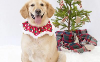 Holiday Photos with Dogs | Aliso Viejo