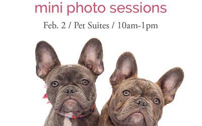 Valentine Pet Portraits in Aliso Viejo CA