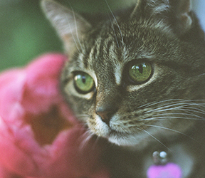 Photos of My Cat at Home with Peony Flowers