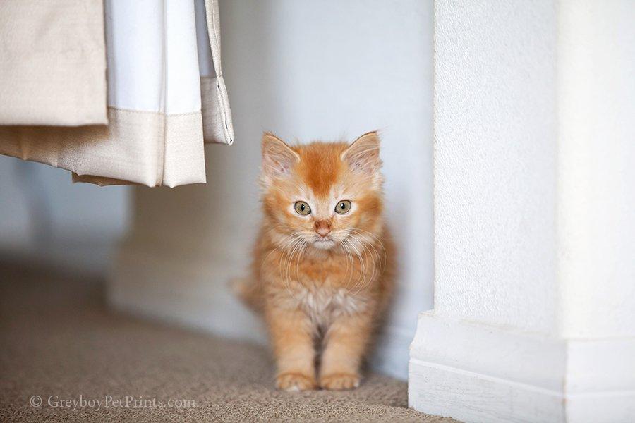 kitten pictures cat photographer Mandi showing cute kitten photo