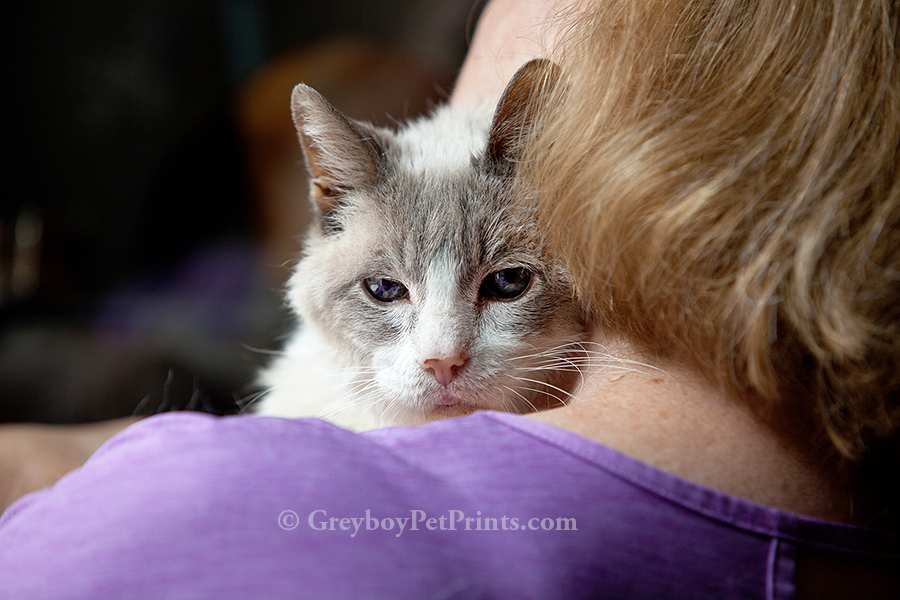 picture of senior social cat at home on mom's shoulder