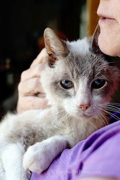 old cat photographed snuggled by mom at home